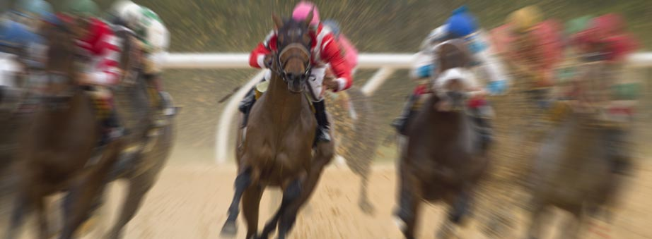 Banner Bar for horse-dog-racing